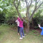 Forest Schools 29